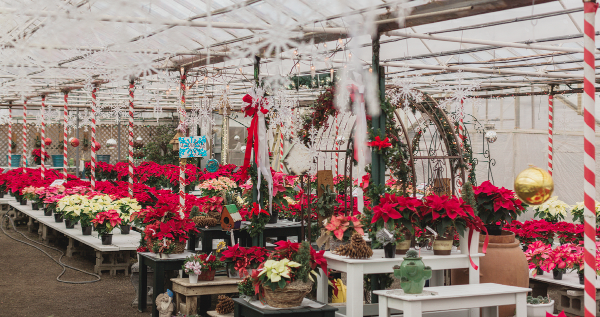 Toledo Sylvania Whiteford Greenhouse Christmas-030